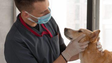 câncer em cachorros